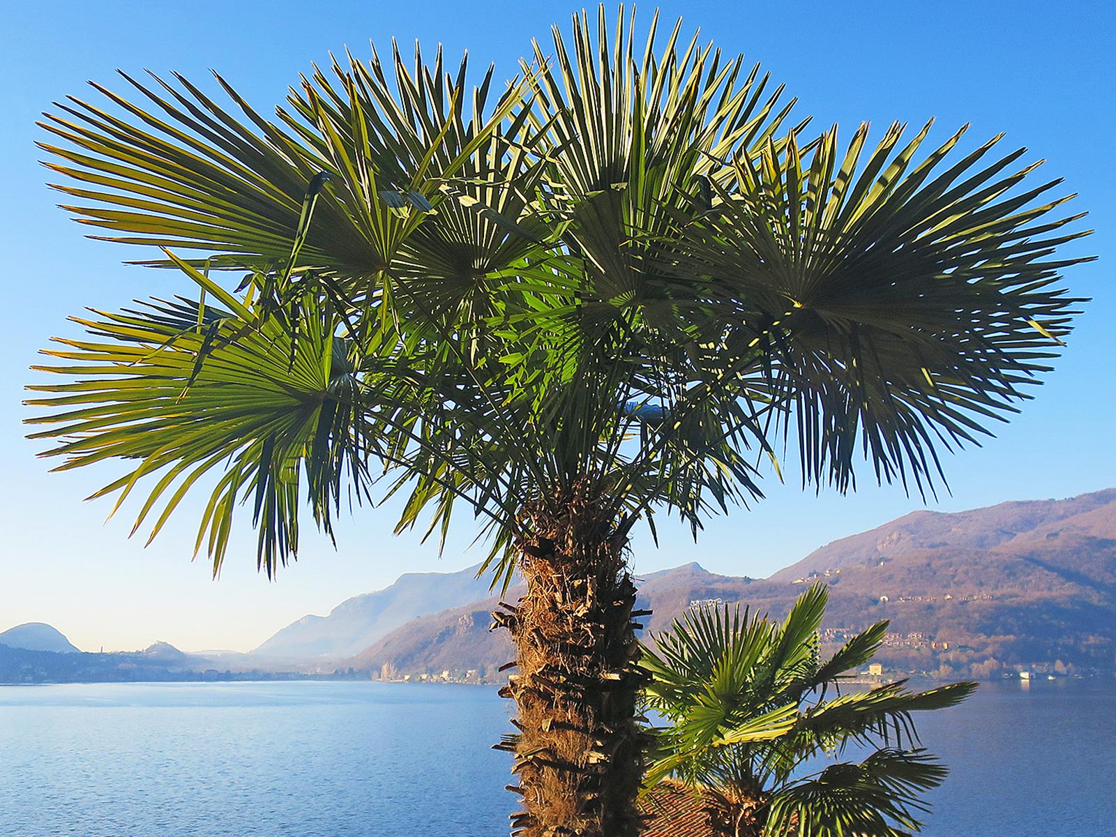 Tipps fürs Tessin: Die 7 schönsten Stopps in der italienischen Schweiz