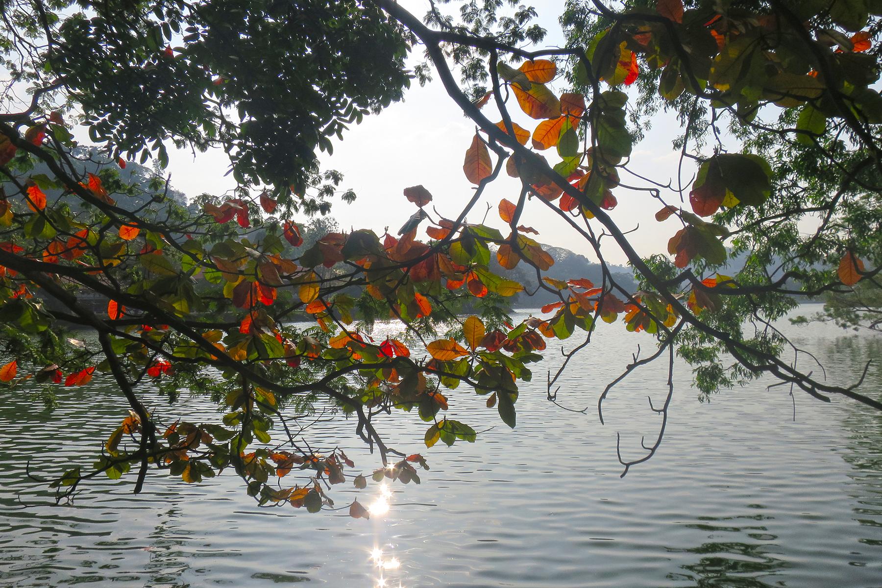 Hauptstadt im Hochland von Sri Lanka: 10 Dinge, die man in Kandy erleben muss