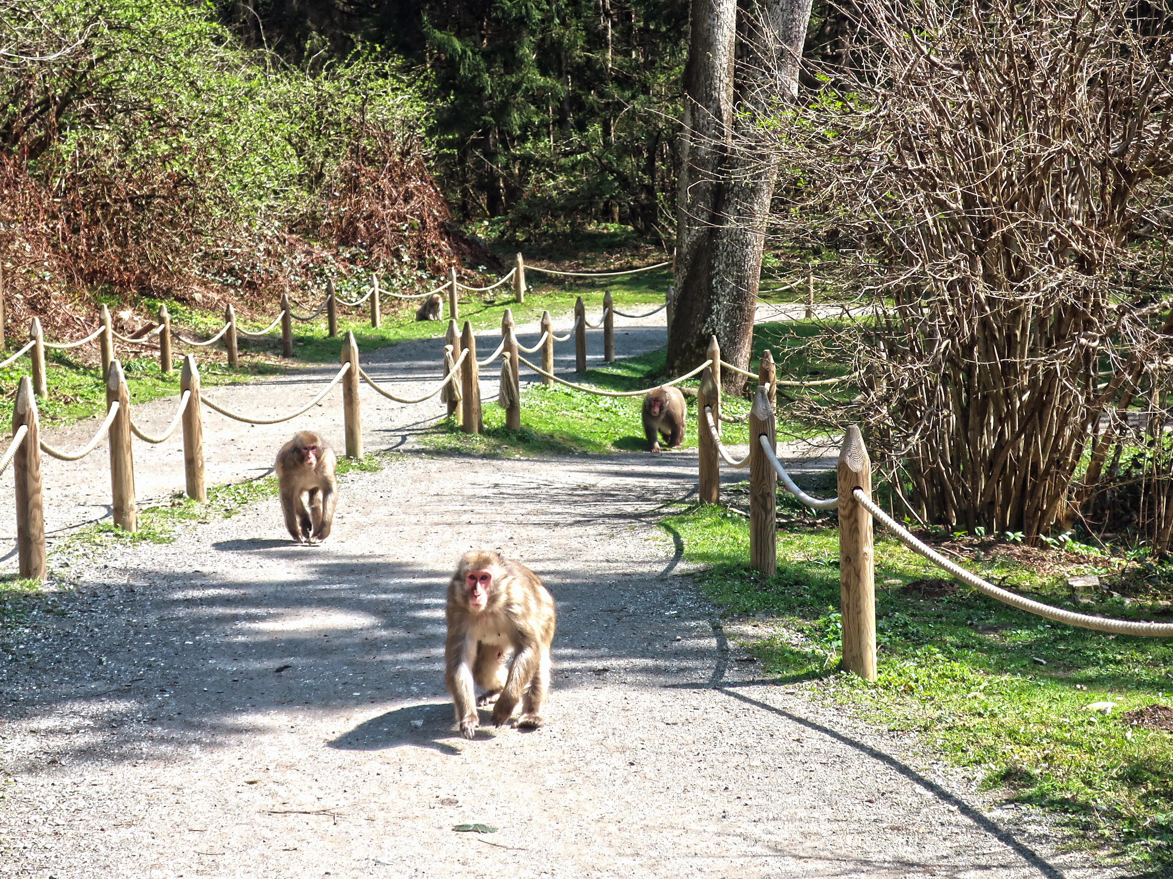 Kärnten für Kinder: 7 Highlighs in der Region Villach zwischen Abenteuer & Auszeit