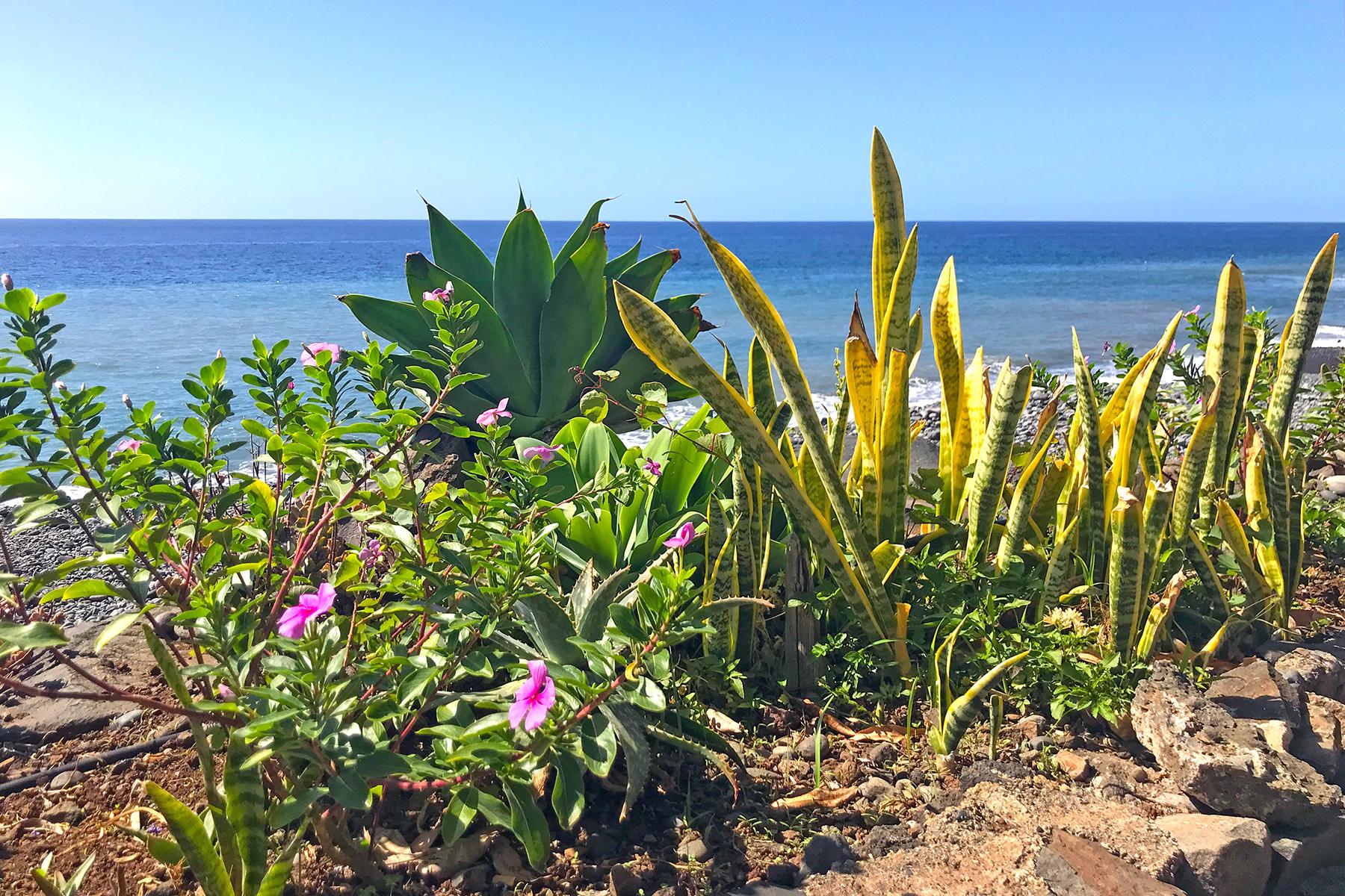 Fajã dos Padres: Die Insel an der Insel auf Madeira