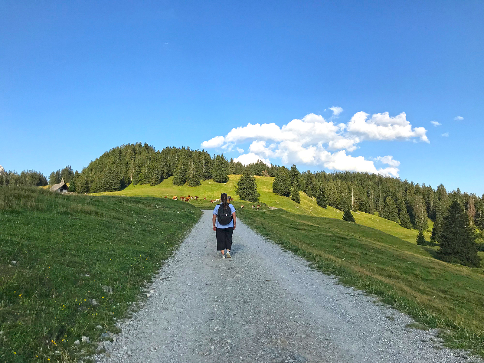 Highlights in Hall-Wattens: Wo sich Kristalle, Kraftorte und Karwendel in Hall-Wattens begegnen
