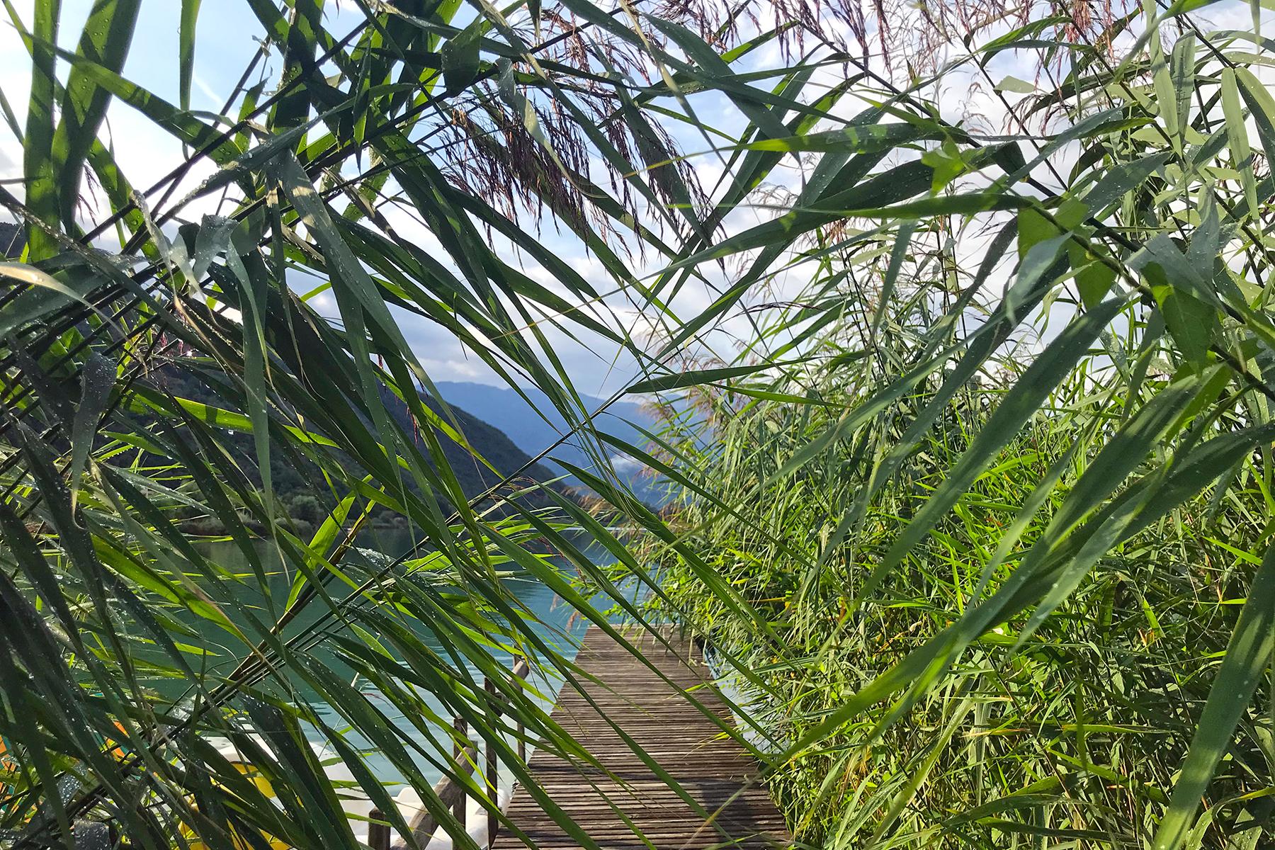 Highlights am Kalterer See: Die schönsten Stopps an der Südtiroler Weinstraße